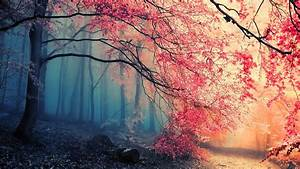 Forest, Trees, Pink, Wallpapers, Hd, Desktop, And, Mobile