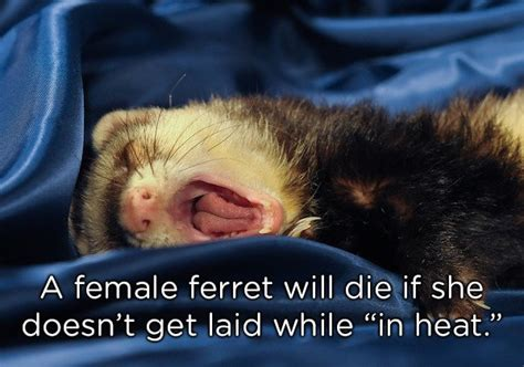 22 Strange Animal Facts That Will Leave You Asking