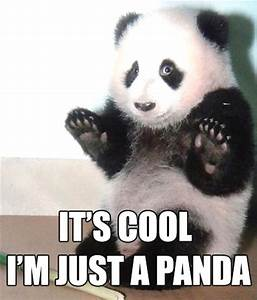 15 Cutest Panda Memes Which Ruled The Internet - Viral Slacker