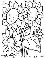 Coloring Sunflower Plants Lovely Sheet Sky sketch template