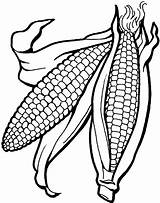 Corn Coloring Pages Ear Cob Drawing Food Printable Getcolorings Indian Template Fall Unique Stalk Getdrawings Vegetables Body Print Vegetable Wickedbabesblog sketch template