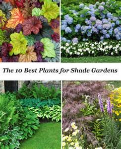 top photos ideas for shade landscape plans 10 best shade garden plants