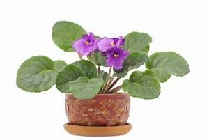 Blumen Bewässern Mit Wollfaden : blumen durch einen wollfaden bew ssern diese ~ Lizthompson.info Haus und Dekorationen