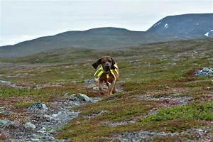 Dog Hunting Gear