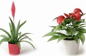 Plante D Intérieur Haute : bicajoux des plantes d int rieur de haute couture pictures ~ Premium-room.com Idées de Décoration