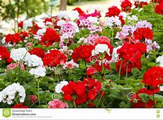 Box Of Mixed Beautiful Flowers RoyaltyFree Stock
