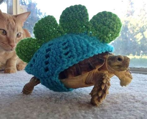 turtle sweaters 20 of the cutest baby wearing tiny sweaters