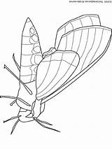 Moth Coloring Pages Lightupyourbrain Insects Butterfly Snakes Totoro Colouring Pixels Bug Print sketch template