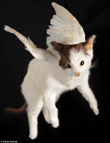 flying cats yetis unicorns and even flying kittens inside the worlds