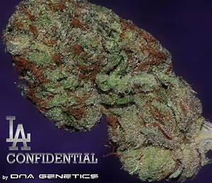 DNA Genetics LA Confidential | Indoor Marijuana Seeds