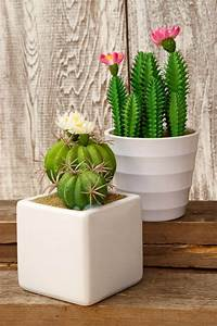 """6 Potted Cactus 7.5"""""""