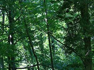 Das Herz Des Waldes : baumgedichte baum gedichte gedichte ber b ume ~ Yasmunasinghe.com Haus und Dekorationen