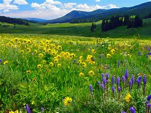 Blue And Yellow Flowers Mountain Meadow Grass Green ...