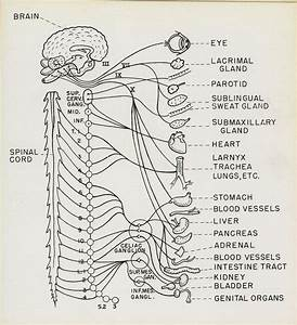 78 Best Brain Zoom Out Images On Pinterest