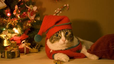 Christmas Cat Wallpaper (75+ Images