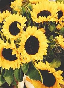 sunflowers header | Tumblr