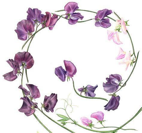 sweet pea designs l acquerello botanico quanta bellezza artiststudio21