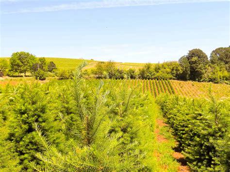 oregon christmas tree growers tree farm property for sale in oregon
