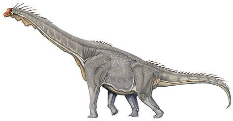10 Long-necked Facts About Mamenchisaurus