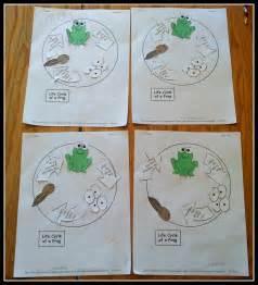 Preschool Frog Life Cycle