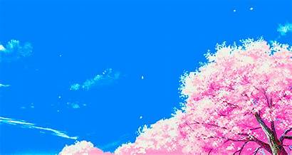 Cherry Japanese Blossoms Scenery Blossom Animated Japan