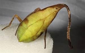 Se Débarrasser Des Araignées : camouflage cette araign e peut se faire passer pour une ~ Louise-bijoux.com Idées de Décoration