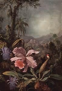 rain forest amazon