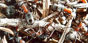 Kakerlaken Im Garten : ungeziefer bettwanzen kakerlaken heimwerker tipps ~ Whattoseeinmadrid.com Haus und Dekorationen