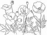 Poppies Coloring Remembrance Poppy Field Template Colouring Memorial Kolorowanki Maki Sheets Adult Dzieci Dla Anzac Bestcoloringpagesforkids Sketch Flanders Templates Popular sketch template