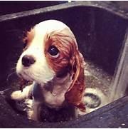 Sad Puppy Eyes Strike ...Sad Puppy
