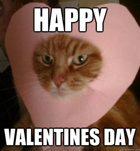 Funny Happy Valentines Day Memes - valentine cat memes quickmeme