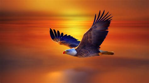 Eagle Wallpapers Free Download - wallpaper.wiki