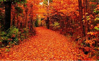 Fall Autumn Nature Path Falling Road Forest