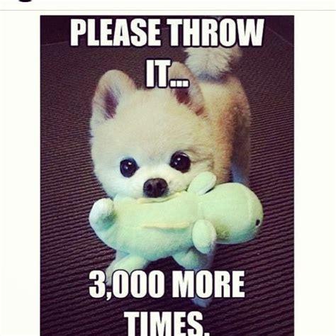 Adorable Animal Memes - please throw it 3000 more times cute animals adorable meme instagram animal pictures animal meme