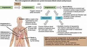Pictures Of Aldosterone