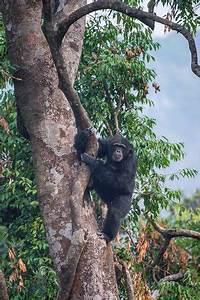 Tacugama Chimpanzee Sanctuary (Freetown) - All You Need to ...