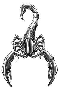Grey Ink Scorpio Tattoos Designs | Dragons | Scorpio