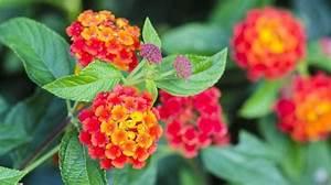 1000 idees sur le theme fleurs tropicales sur pinterest With deco jardin zen exterieur 6 modales du jardin japonais rien nest plus exotique