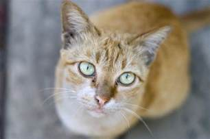 prednisone for cats with cancer cancer in cats ehow