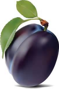 Vector Purple Plums