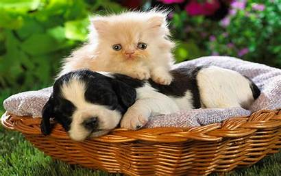 Cat Dog Cats Dogs Wallpapers Definition Animal