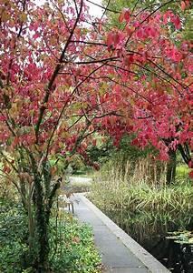 Garten Und Landschaftsbau Bochum : botanischer garten ruhr uni euonymus hamiltonian hamiltons spindelstrauch ~ Frokenaadalensverden.com Haus und Dekorationen