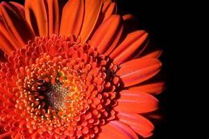 Aufbau Einer Blume : orange blumen aufbau 2 stockbilder bild 690374 ~ Whattoseeinmadrid.com Haus und Dekorationen