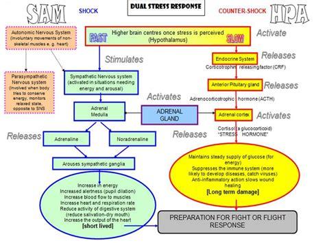 stress response works doctor wilsons original