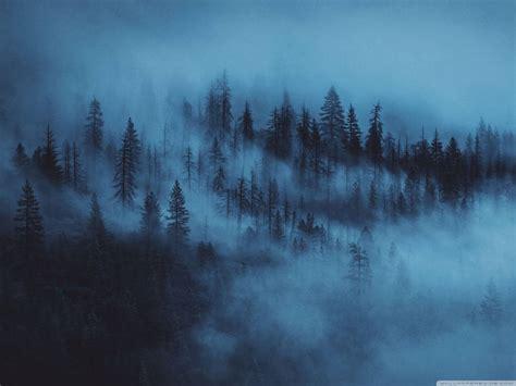 woods aesthetic ultra hd desktop background