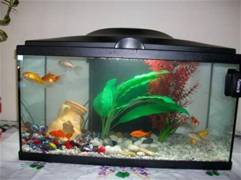 poisson d eau froide pour aquarium au gres du temps