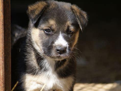 Cerco In Regalo - cerco animali in regalo cerco bulldog o bouledogue