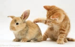 Baby Kitten and Bunny