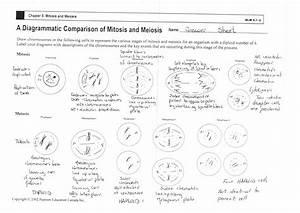 13 Best Images Of Genetics And Meiosis Worksheet