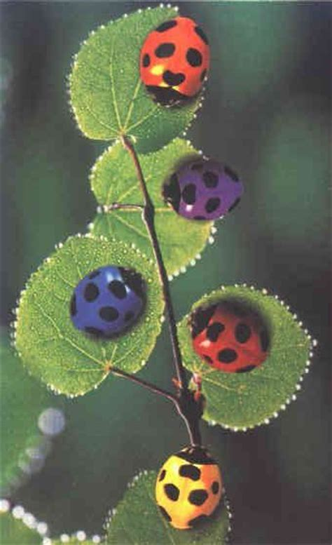what color is a ladybug preschool with